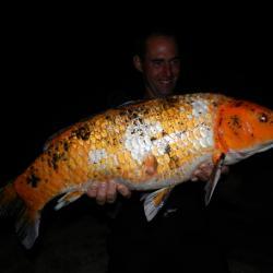 Franck Carpe de Koi de 8 kg